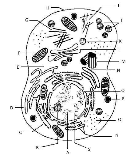Identify the components of a cell