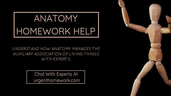 Anatomy Homework Help